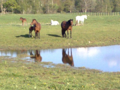 Fina hästbilder blir det när man vandrar i Halland.